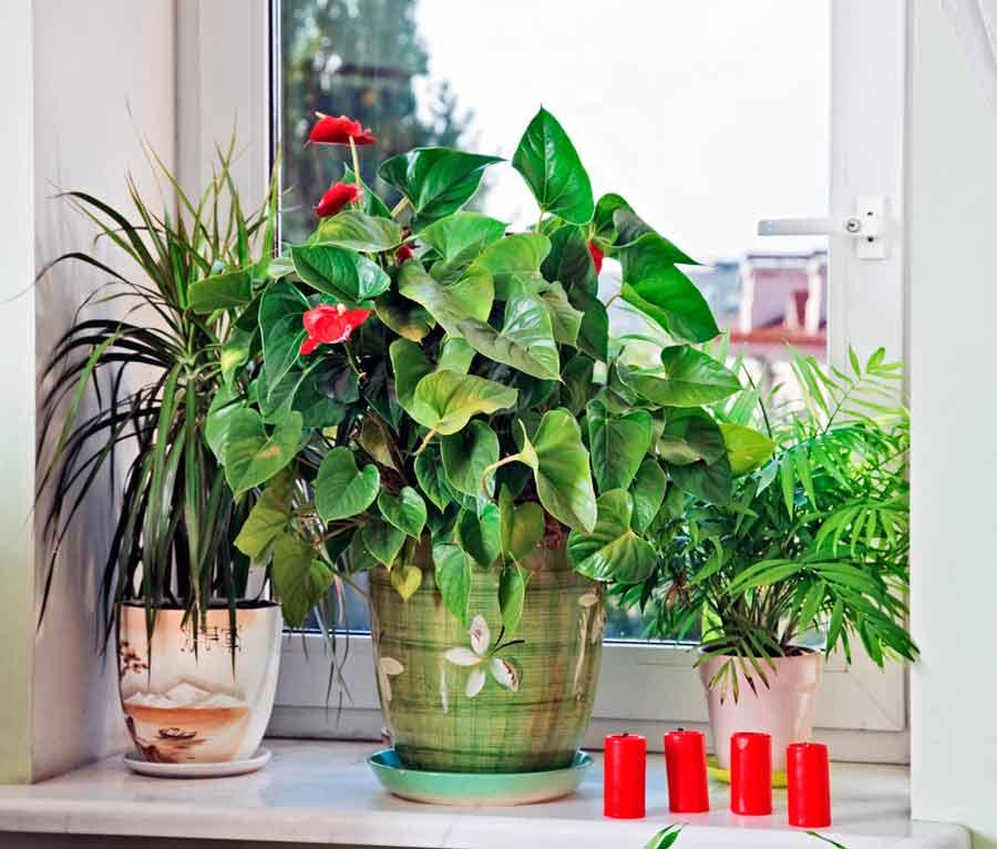 Можно ли искусственные цветы держать дома