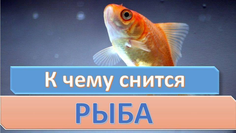 Мертвая рыба реке