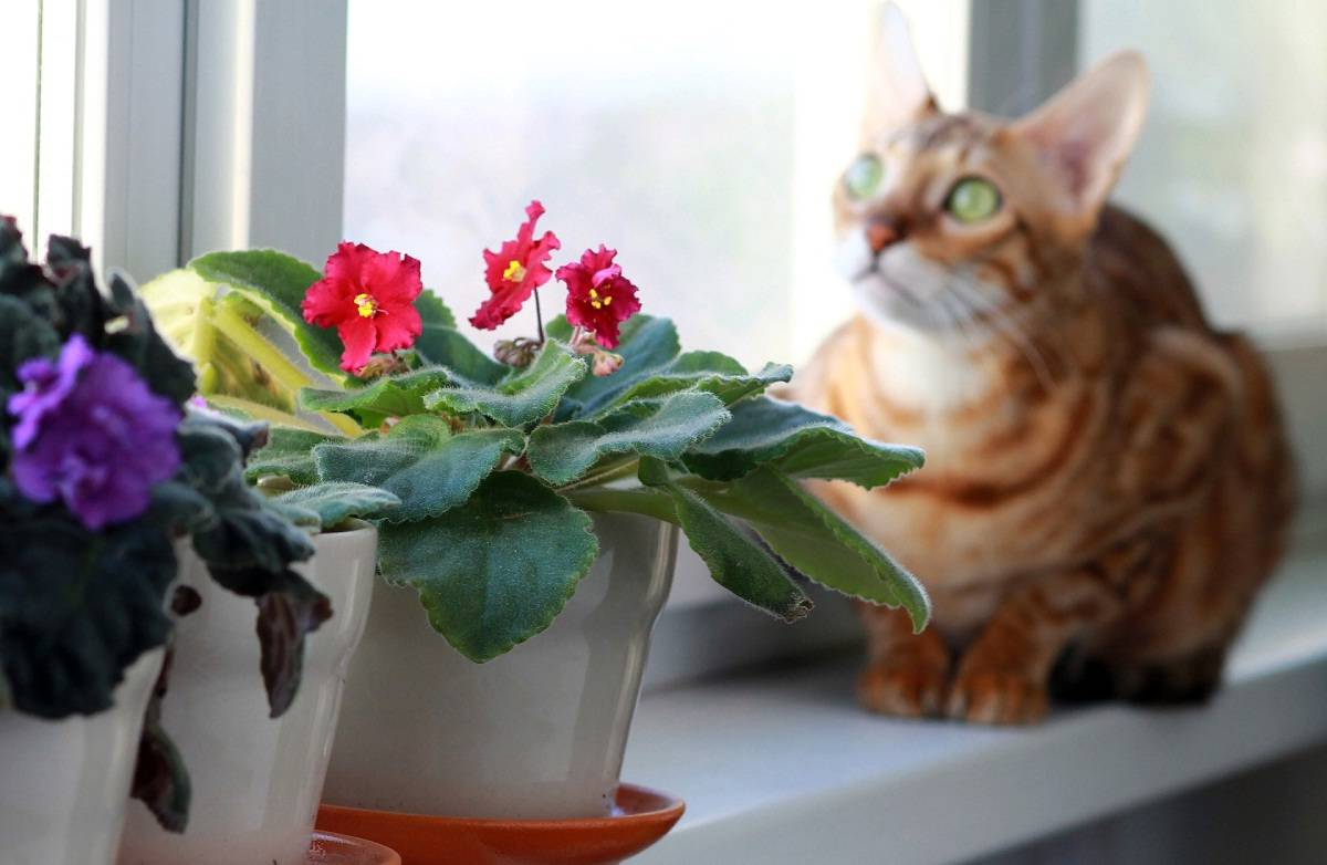Цветок фиалки — приметы и суеверия