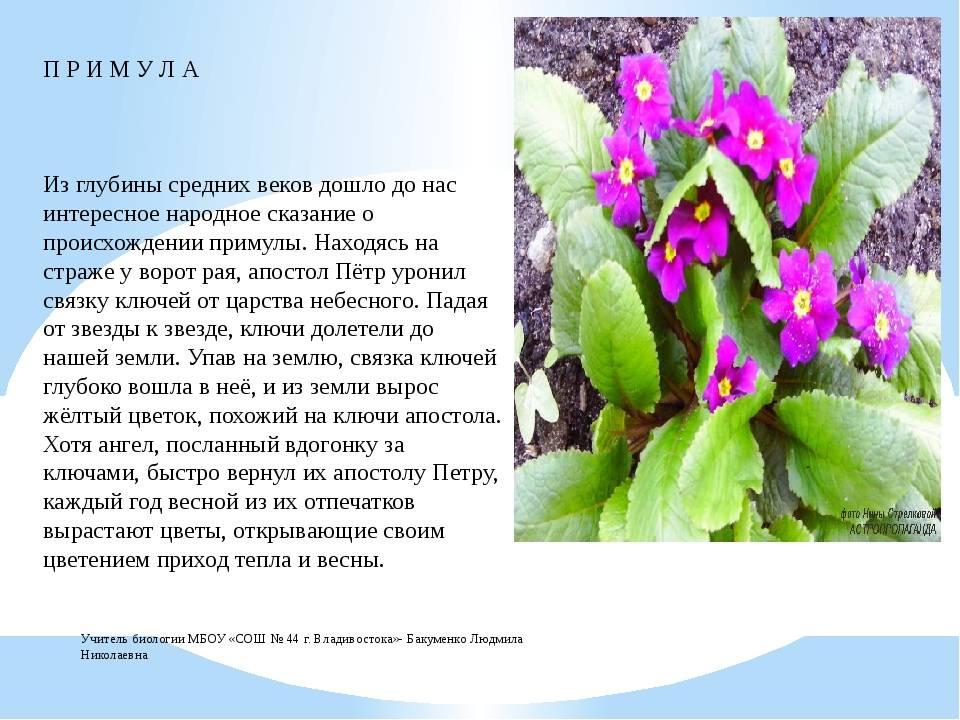 Первые цветы весны