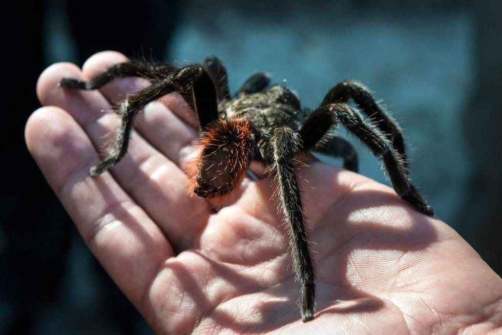 Увидеть белого паука: трактование приметы