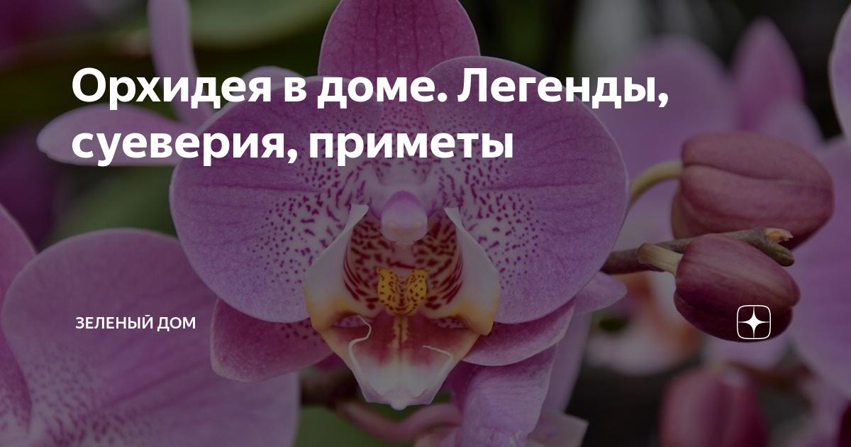 Орхидея: можно ли держать дома, приметы и суеверия для женщин и мужчин