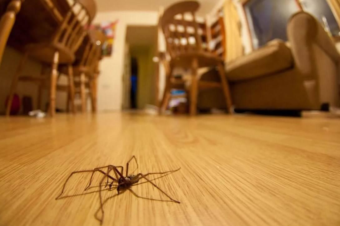 Что говорят приметы о насекомых в доме