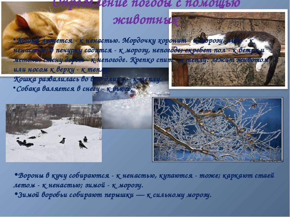 Весенние приметы - народные приметы про весну и о погоде весной. весенние народные приметы и суеверия о погоде