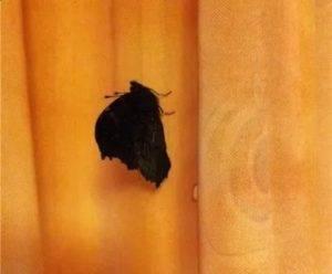 Бабочка села на человека: примета расскажет о предстоящих переменах