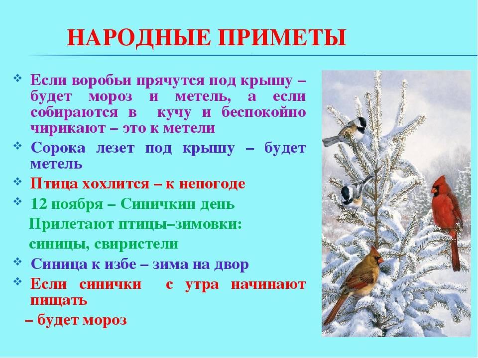 Народные приметы о зиме — 5 примет для детей и взрослых