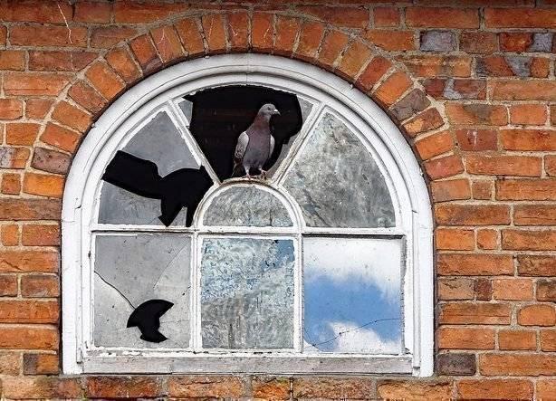Голубь ударился в окно и улетел: толкование приметы   zdavnews.ru