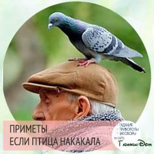 Птица накакала на голову или одежду: приметы