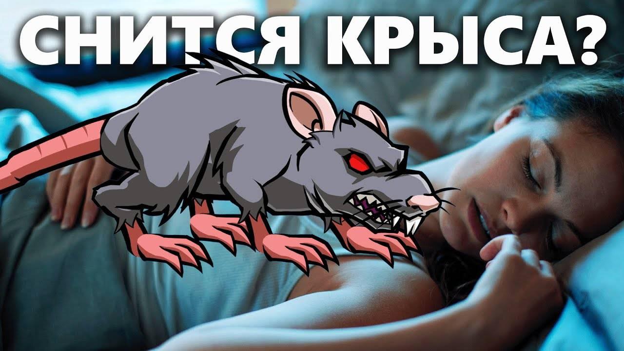 Сонник крысы в пище. к чему снится крысы в пище видеть во сне - сонник дома солнца