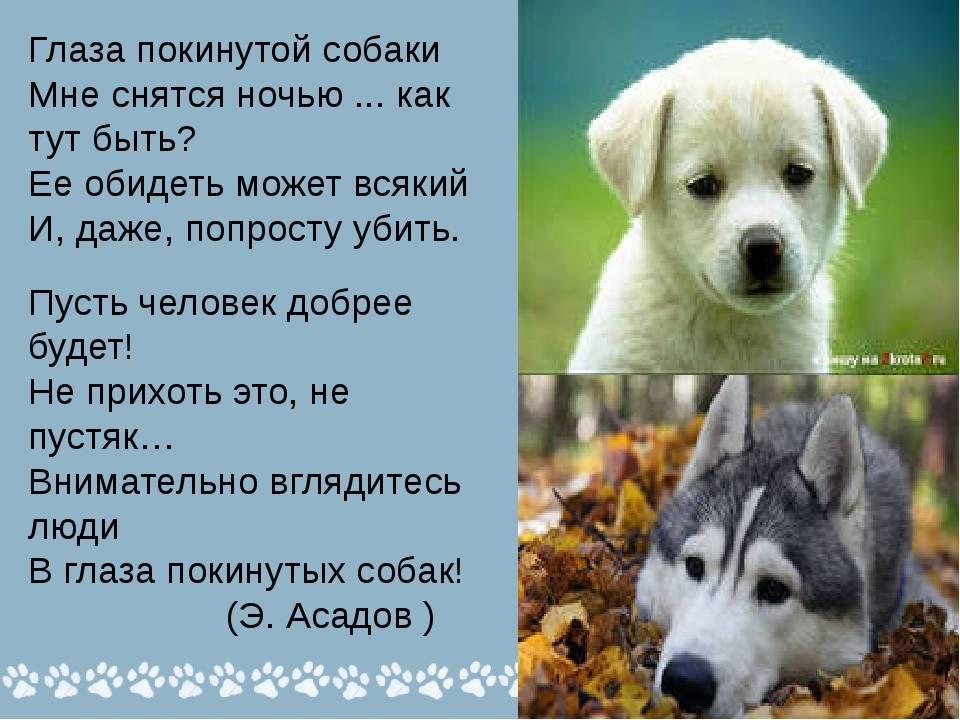 Сонник собака белая. к чему снится собака белая видеть во сне - сонник дома солнца