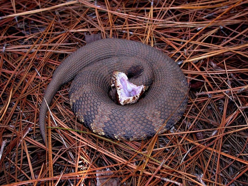 Очень большая змея