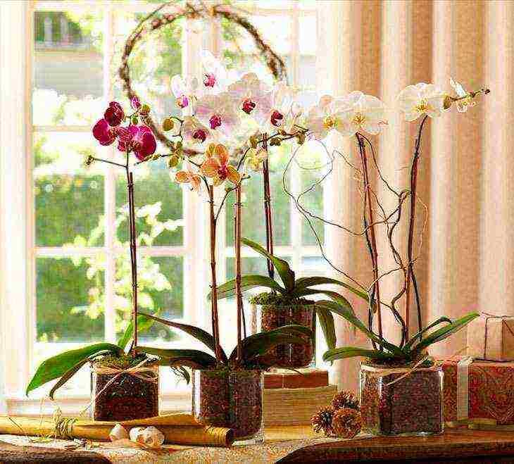 Роскошные орхидеи: почему считается, что их лучше не держать дома