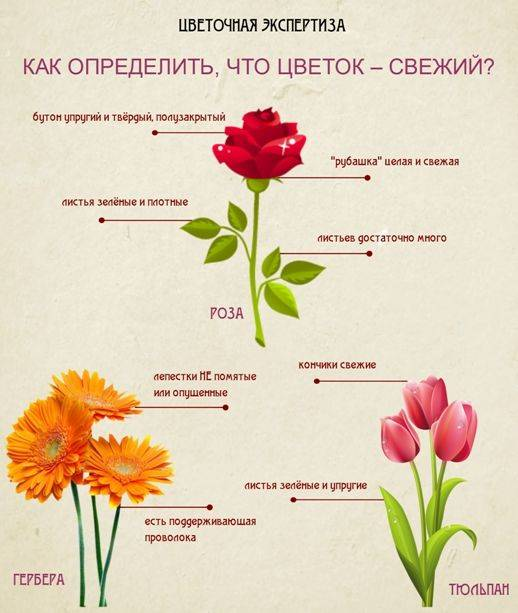 Количество цветов в букете значение