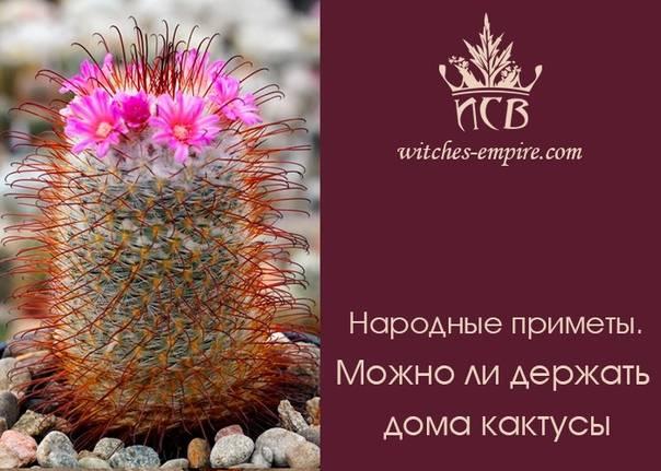 Приметы о кактусе в доме
