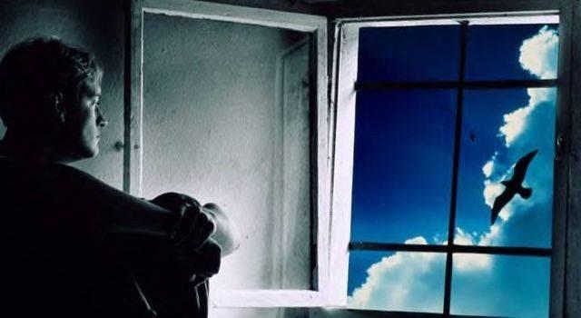 К чему птица ударилась в окно и улетела? толкование приметы и способы избежать негатив