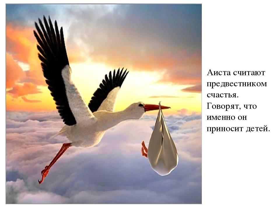Народные приметы. аист