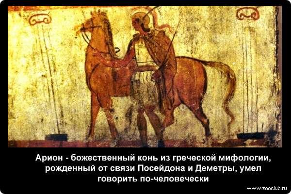 Гарпии — полуженщины-полуптицы из мифов древней греции