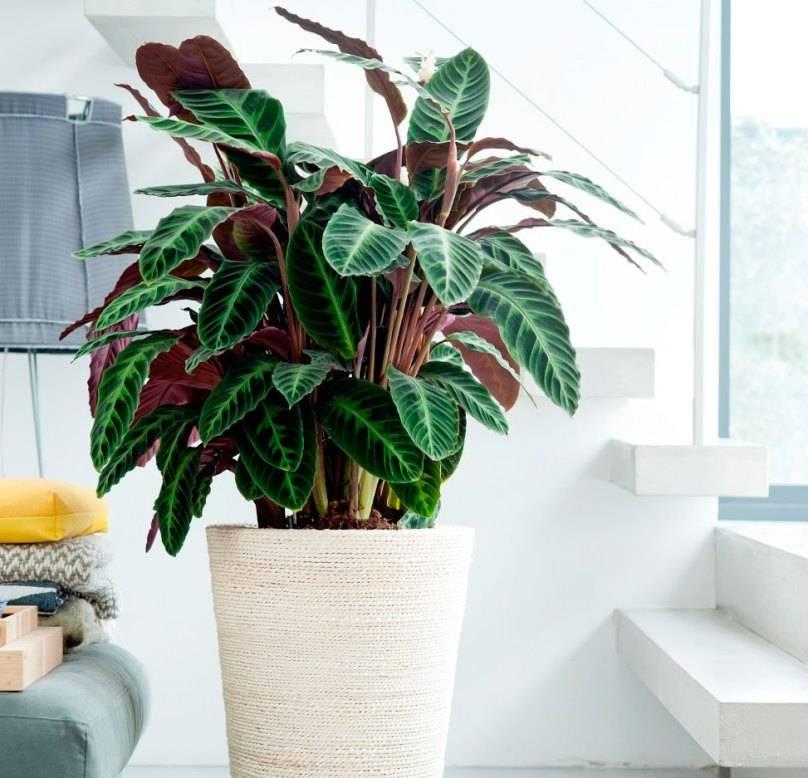 Комнатные цветы в доме — какое растение выбрать по приметы