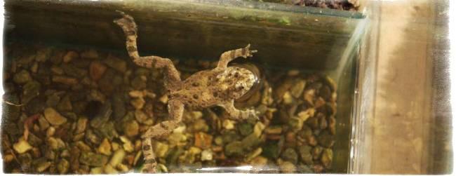 Лягушка в доме: к чему примета
