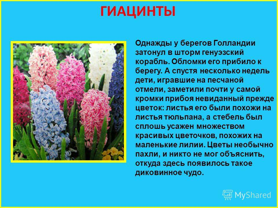 Старинные поверья о цветах — символах весны