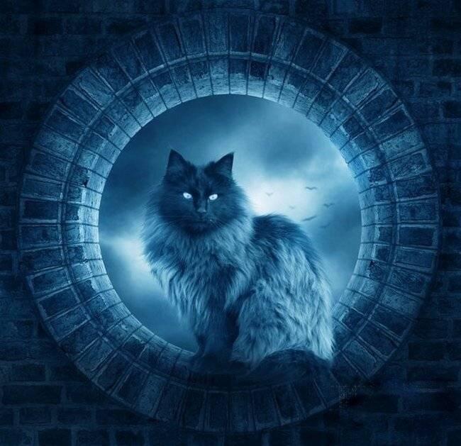 Мистика кошек — след в истории и энергетика