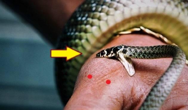 Почему приснилась змея и как толковать такой сон :: инфониак