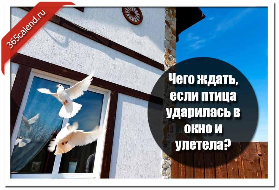 Примета — птица ударилась в окно и улетела: к чему врезалась, что означает, если стукнулась в стекло на работе, какое это народное суеверие, что делать?