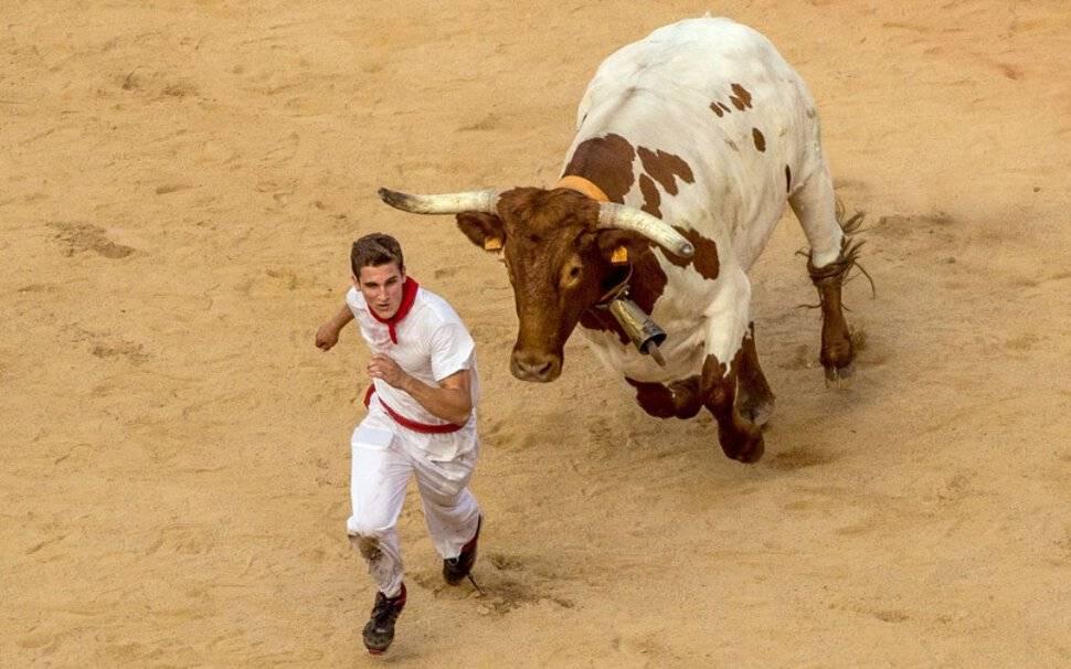 К чему снится бык: женщине и мужчине, большой и разъяренный, убегать от животного
