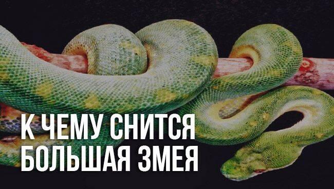 К чему снится змеи. видеть во сне змеи - сонник дома солнца