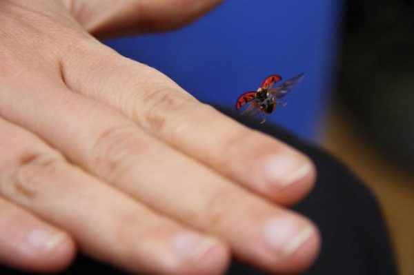 Что значит, если на тебя села стрекоза или бабочка: приметы и суеверия - вкусно дорого