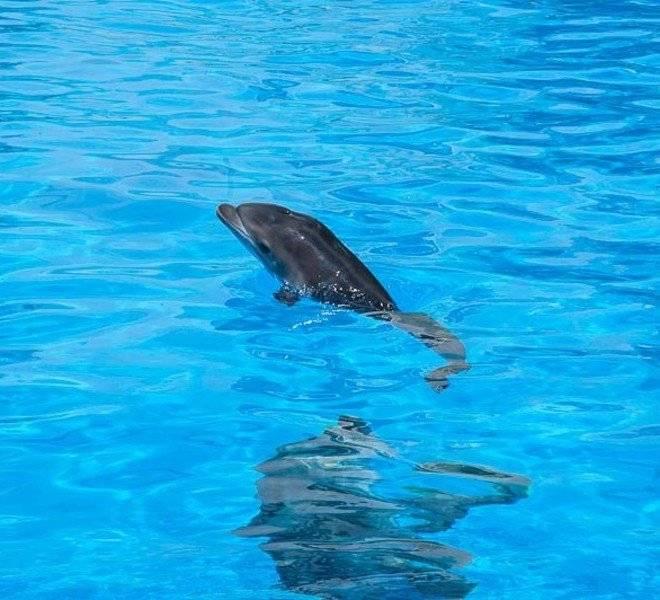 Сон: дельфин