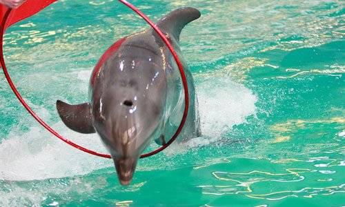 К чему снятся дельфины