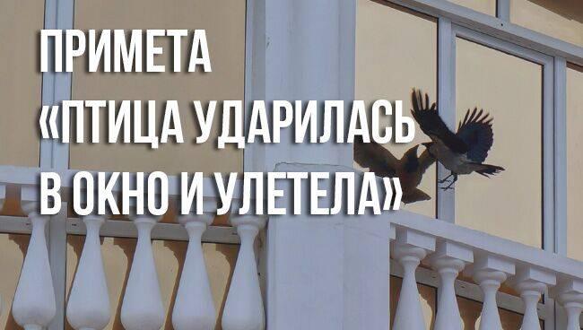 Птица залетела в дом через окно, на балкон: примета, что делать, если птичка влетела в квартиру