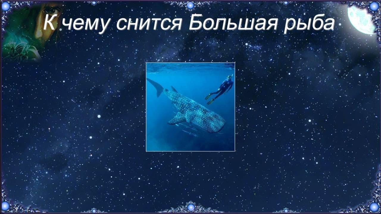К чему снится большая рыба в воде: значение сна и самое полное толкование сновидения - tolksnov.ru