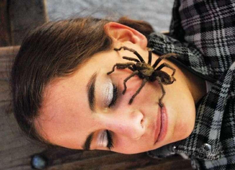 Сонник я паук. к чему снится я паук видеть во сне - сонник дома солнца