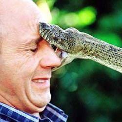 Сонник ядовитая змея укусила. к чему снится ядовитая змея укусила видеть во сне - сонник дома солнца