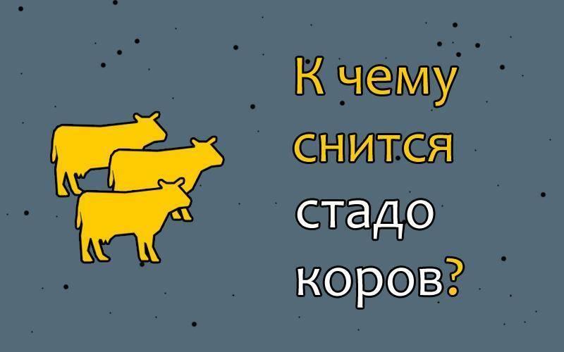 К чему снится корова мужчине или женщине: толкование образа по сонникам к чему снится корова мужчине или женщине: толкование образа по сонникам