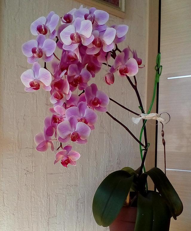 Орхидея в доме — приметы и суеверия