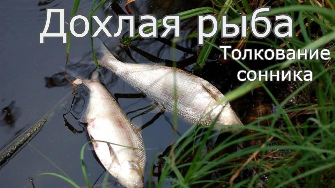 Рыба мертвая в сети