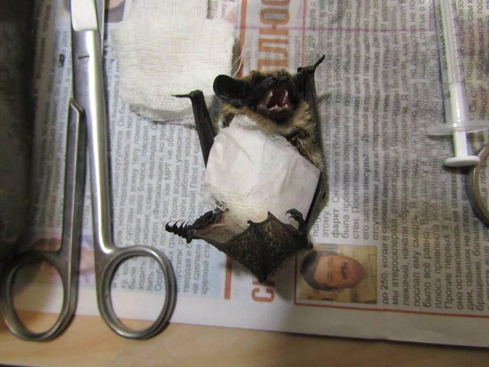 Что по приметам означает летучая мышь, залетевшая в квартиру