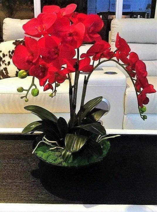Орхидея в доме: приметы, суеверия и способы размещения