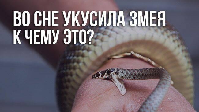 Во сне укусила змея — к чему это?
