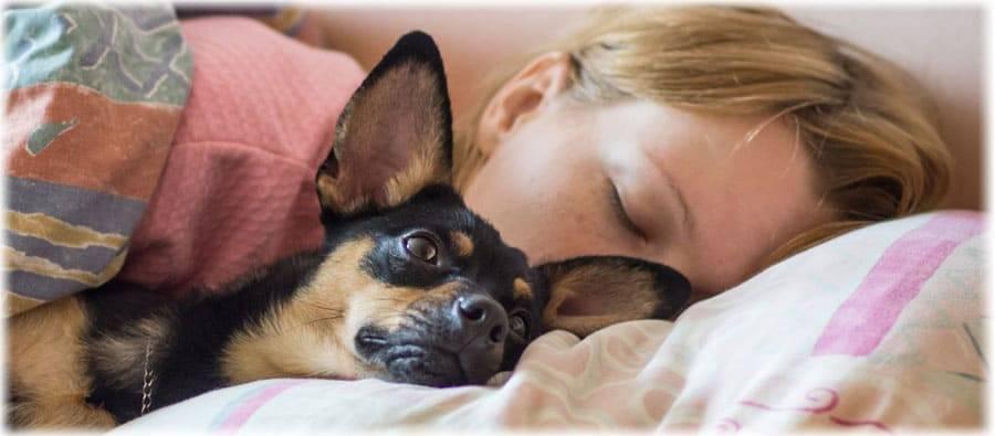 Сонник укусила собственная собака. к чему снится укусила собственная собака видеть во сне - сонник дома солнца