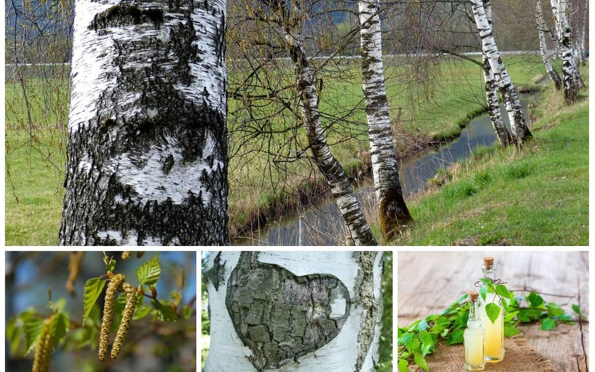 Народные приметы о листьях и деревьях - частные заметки