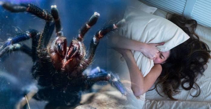 Огромные пауки