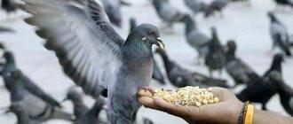 Примета: птица накакала на одежду человека, голову, руку