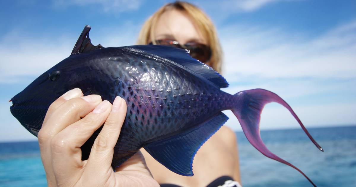 К чему снится поймать большую рыбу?