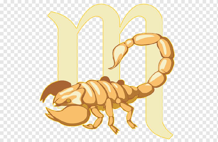 Знак зодиака скорпион (24 октября — 22 ноября) — типичные черты характера - знак зодиака скорпион (scorpius) 24.10–22.11