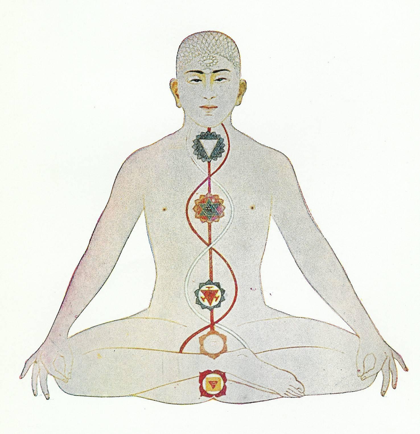Чакра муладхара - за что отвечает у женщин первая чакра муладхара, ее активация и где находится