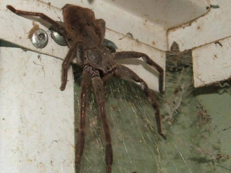 Сонник пауки разных размеров в. к чему снится пауки разных размеров в видеть во сне - сонник дома солнца
